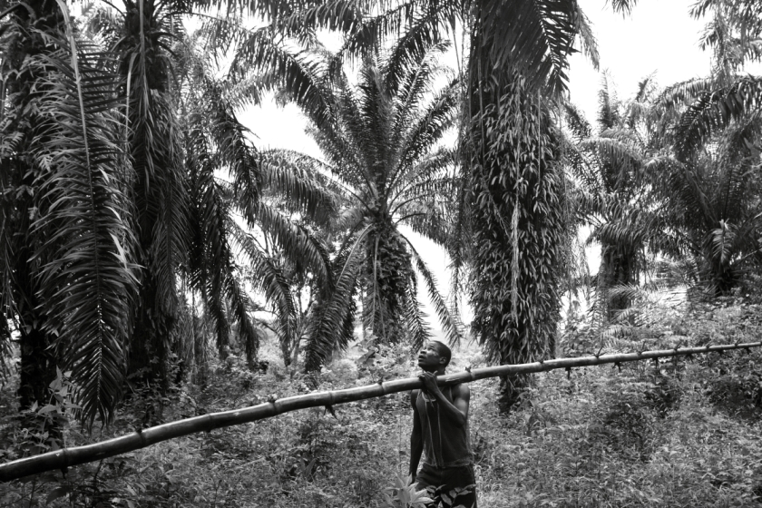 Palm farmers